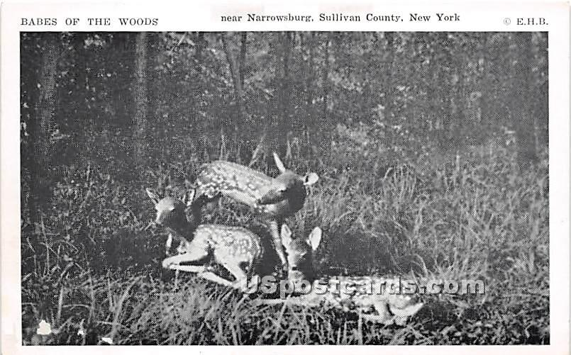 Babes of the Woods - Narrowsburg, New York NY Postcard