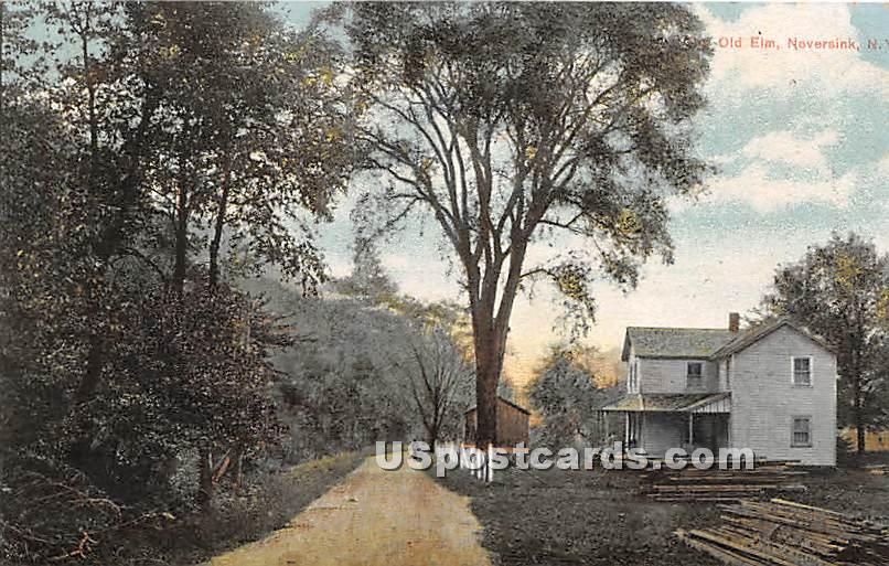 Old Elm - Neversink, New York NY Postcard