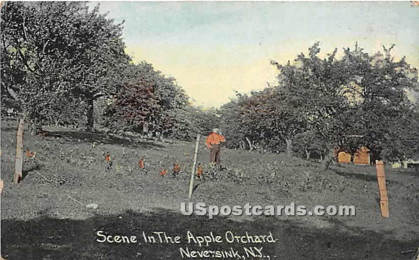 Scene in the Apple Orchard - Neversink, New York NY Postcard