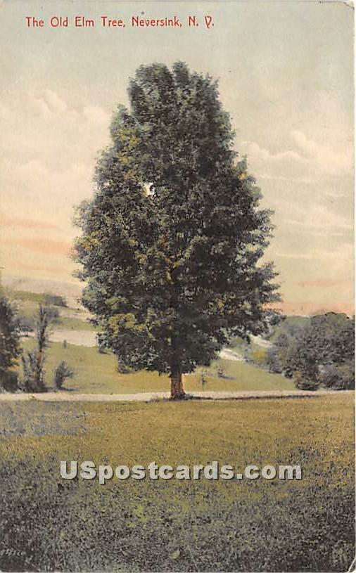 The Old Elm Tree - Neversink, New York NY Postcard