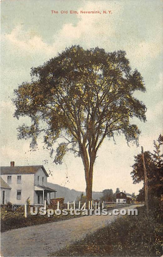 The Old Elm - Neversink, New York NY Postcard
