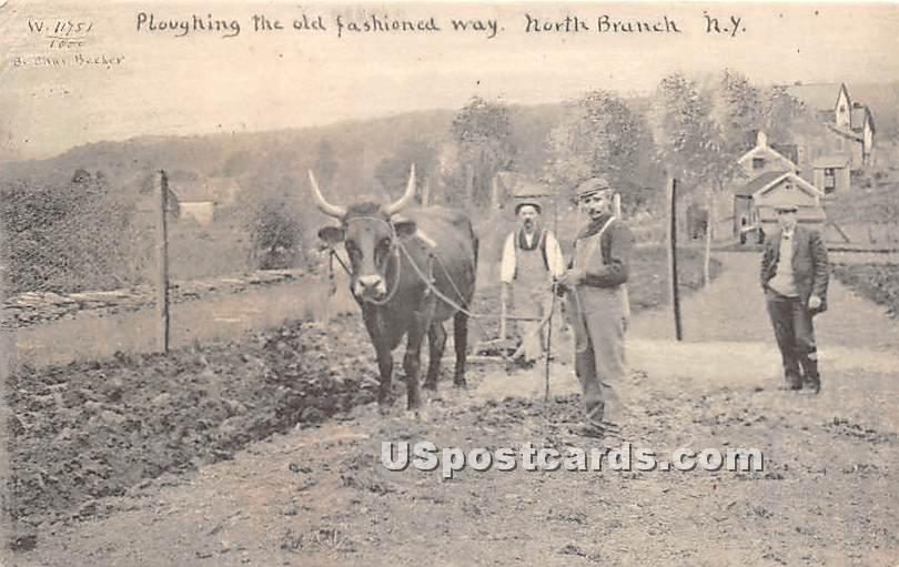 Ploughing the Old Fashioned Way - North Branch, New York NY Postcard