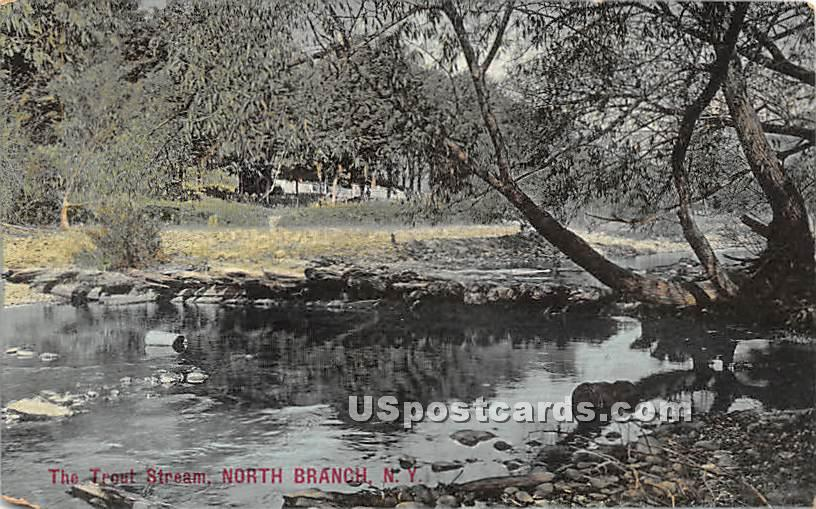 Trout Stream - North Branch, New York NY Postcard