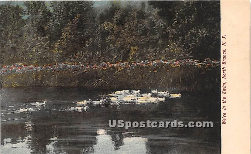We're in the Swim - North Branch, New York NY Postcard