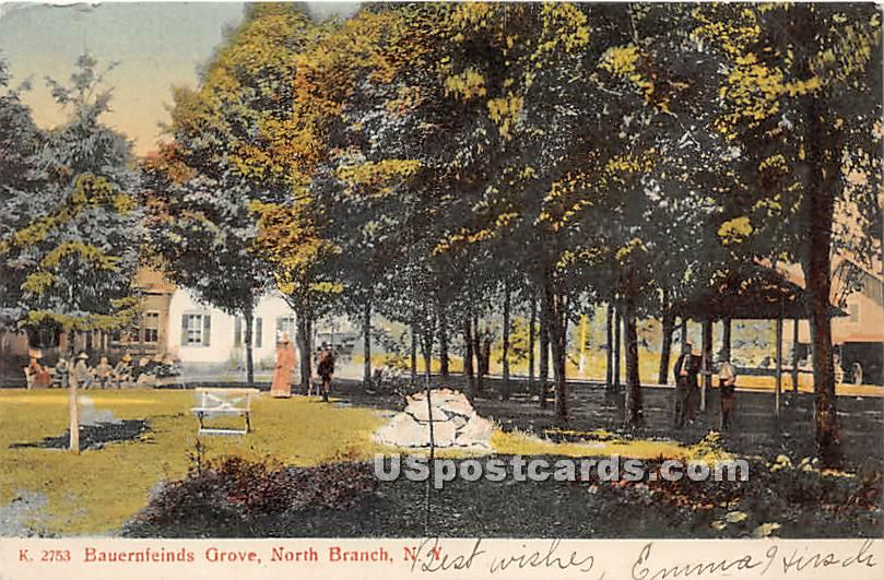 Bauernfeinds Grove - North Branch, New York NY Postcard