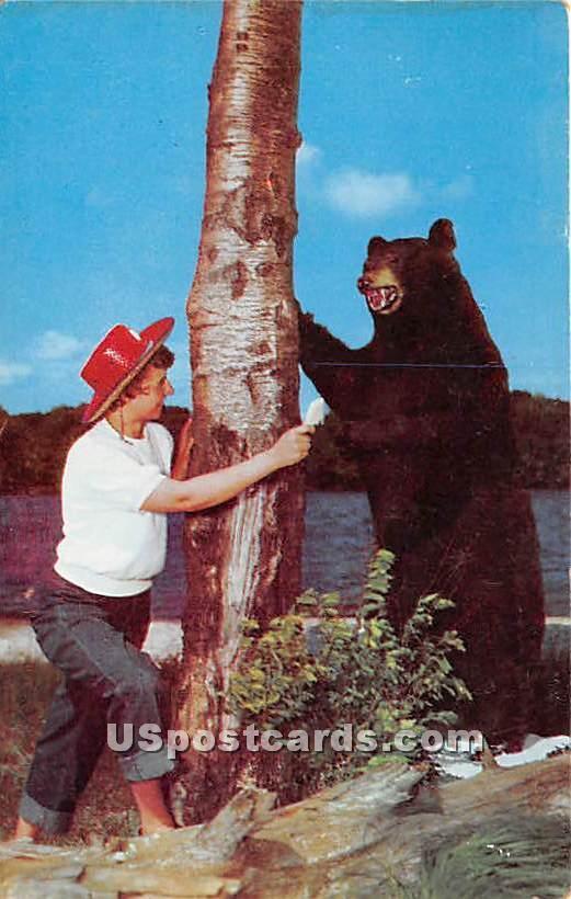 Bear - Norwich, New York NY Postcard