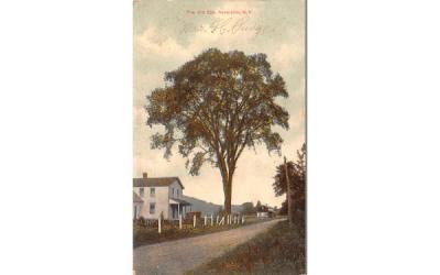The Old Elm Neversink, New York Postcard