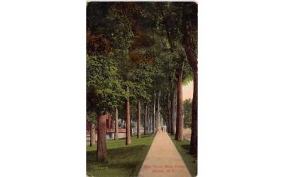 Elm Trees Oneida, New York Postcard