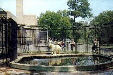 Seneca Park Zoo - Rochester, New York NY Postcard