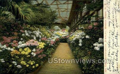 Chrysanthemum Display - Bronx Park, New York NY Postcard