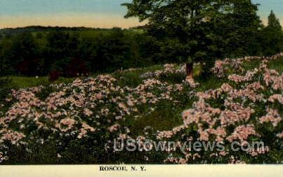 Roscoe, New York, NY Postcard