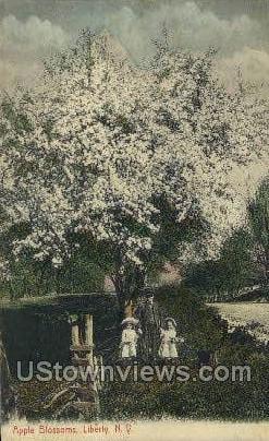 Apple Blossoms - Liberty, New York NY Postcard
