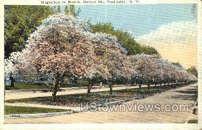 Oxford Street - Rochester, New York NY Postcard
