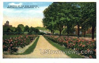 Maplewood Park - Rochester, New York NY Postcard