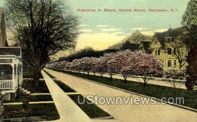 Oxford Street - Rochester, New York NY Postcard