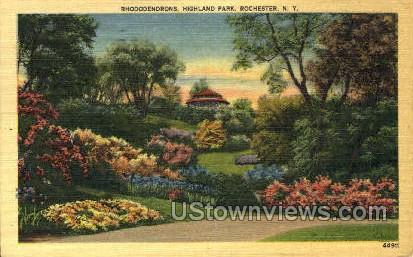 Rhododendrons, Highland Park - Rochester, New York NY Postcard