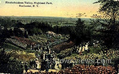 Rhododendron Valley - Rochester, New York NY Postcard