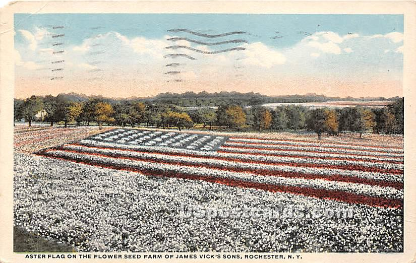 Aster Flag, James Vick's Sons - Rochester, New York NY Postcard