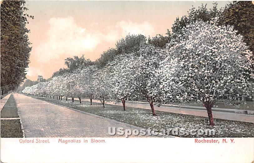 Magnolia, Oxford Street - Rochester, New York NY Postcard