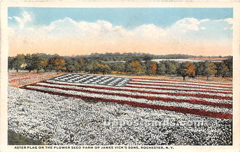 Aster Flag, Farm of James Vick's Sons - Rochester, New York NY Postcard