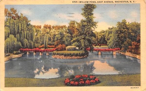 Willow Pond Rochester, New York Postcard