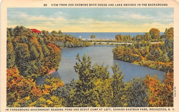 From Zoo Rochester, New York Postcard