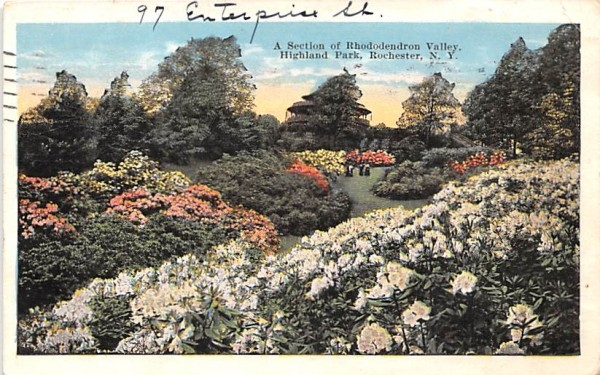 Rhododendron Valley Rochester, New York Postcard