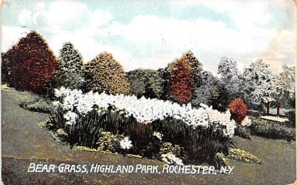 Bear Grass Rochester, New York Postcard