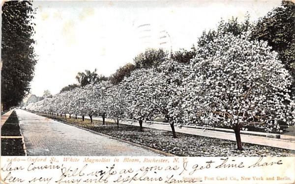 Oxford Street Rochester, New York Postcard