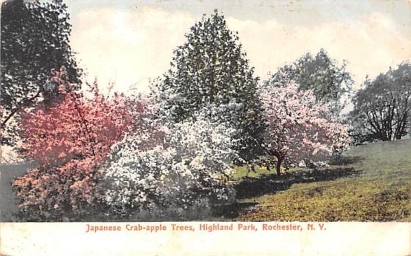 Japanese Crab-apple Trees Rochester, New York Postcard