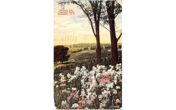 German Iris Rochester, New York Postcard
