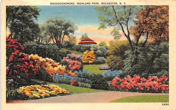 Rhododendrons in Bloom Rochester, New York Postcard