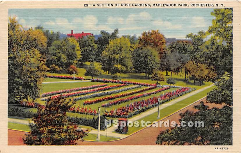 Rose Garden, Maplewood Park - Rochester, New York NY Postcard