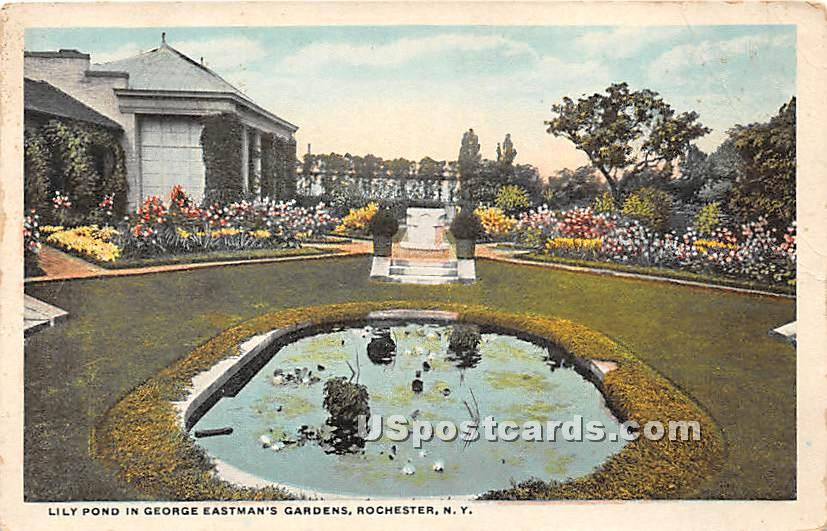 Lily Pond, George Eastman's Gardens - Rochester, New York NY Postcard