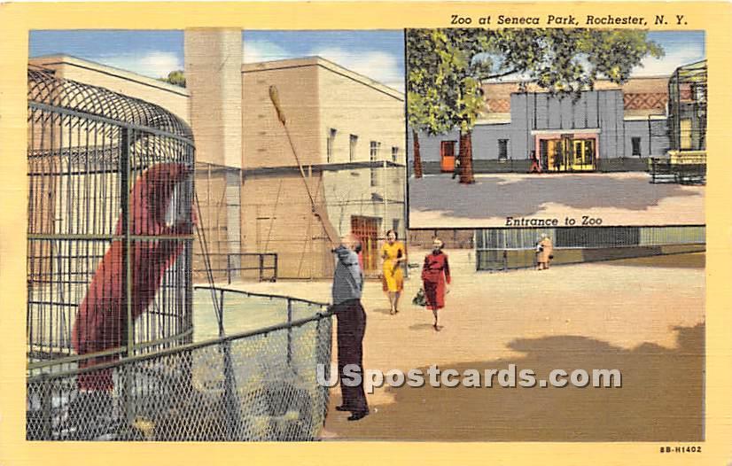 Zoo, Seneca Park - Rochester, New York NY Postcard