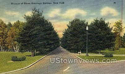 Ave of Pines - Saratoga Springs, New York NY Postcard