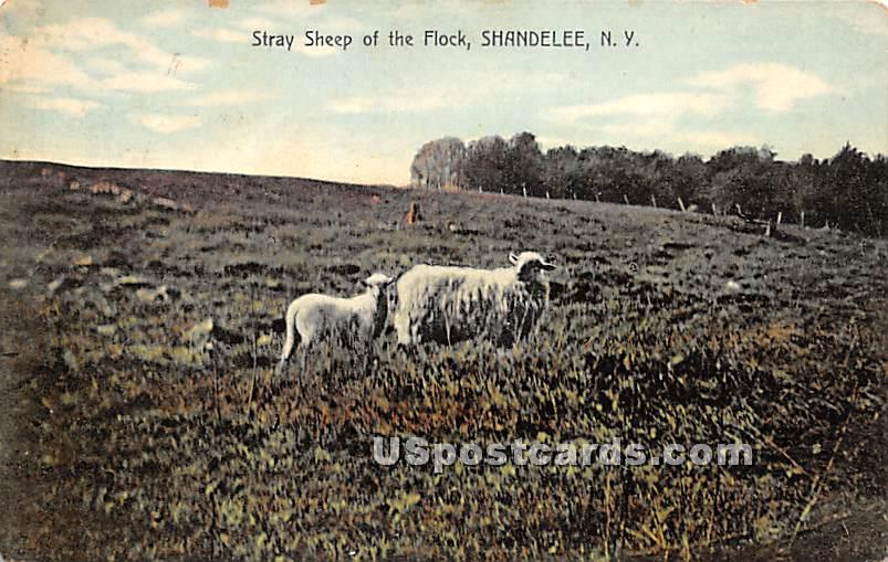 Stray Sheep of the Flock - Shandelee, New York NY Postcard