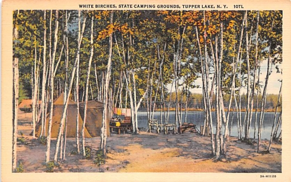 White Birches Tupper Lake, New York Postcard
