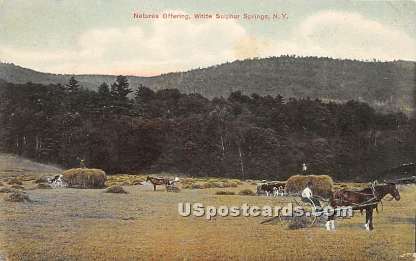 Natures Offering - White Sulphur Springs, New York NY Postcard