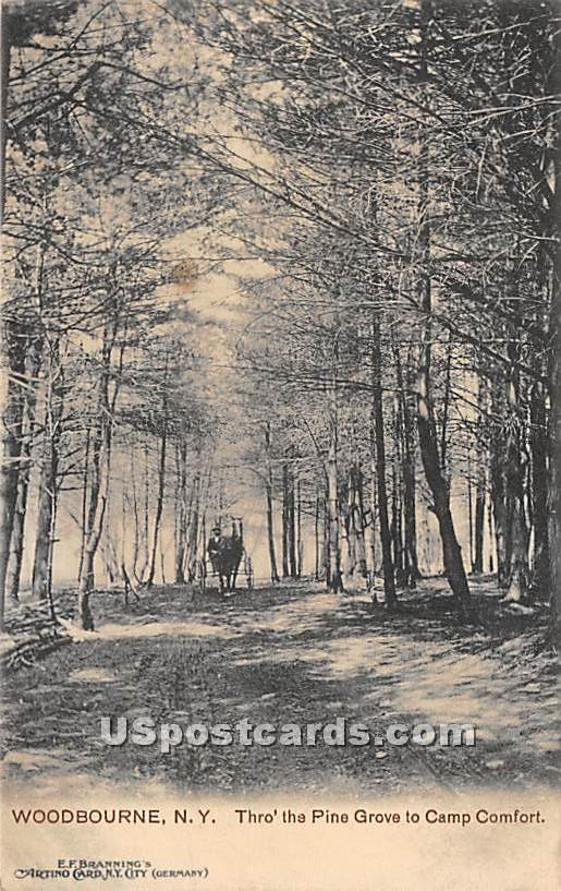 Thro the Pine Grove to Camp Comfort - Woodbourne, New York NY Postcard