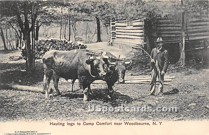 Hauling Logs to Camp Comfort - Woodbourne, New York NY Postcard