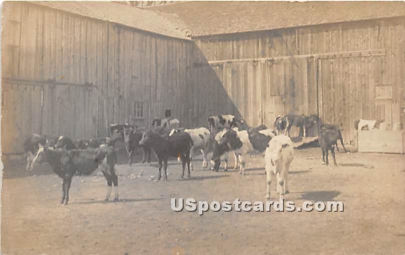 Stock of Cattle - Wurtsboro, New York NY Postcard