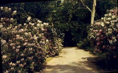 Bayard Cutting Arboretum - Long Island, New York NY Postcard