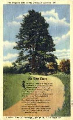 Petrified Gardens - Saratoga Springs, New York NY Postcard