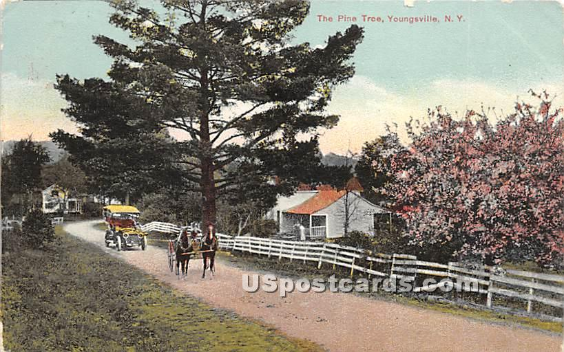 Pine Trees - Youngsville, New York NY Postcard