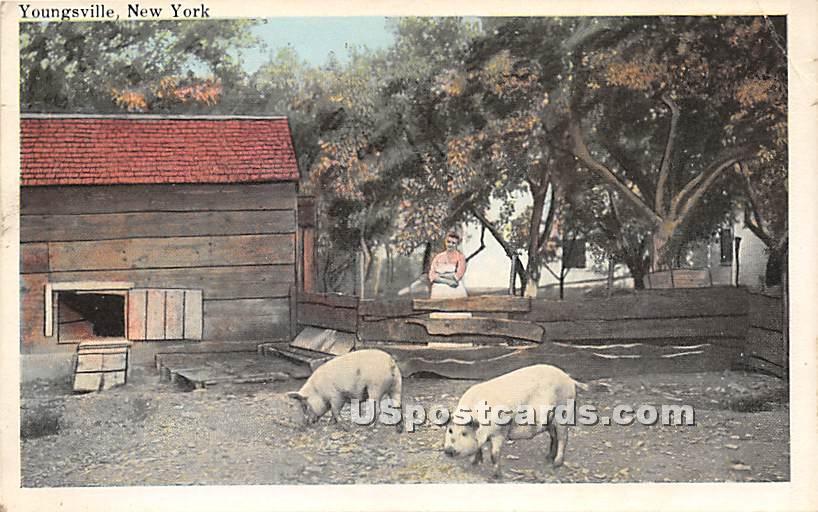 Farm - Youngsville, New York NY Postcard