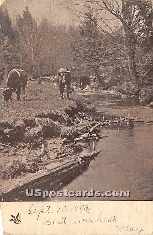 Youngsville Creek - New York NY Postcard