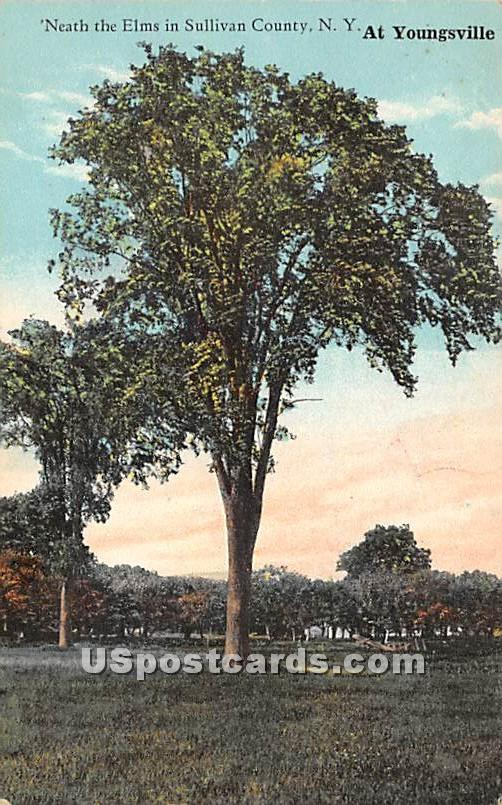 Neath the Elms - Youngsville, New York NY Postcard