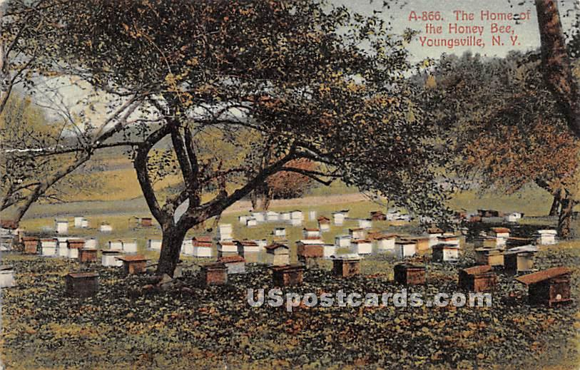 The Home of the Honey Bee - Youngsville, New York NY Postcard