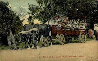 Ox Team at Brookside Park - Cleveland, Ohio OH Postcard